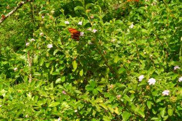 viajes beagle guatemala esencial 2