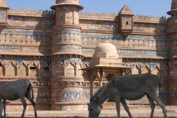 viajes beagle india triangulo de oro 2
