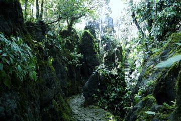 viajes beagle indonesia sinfonia 1