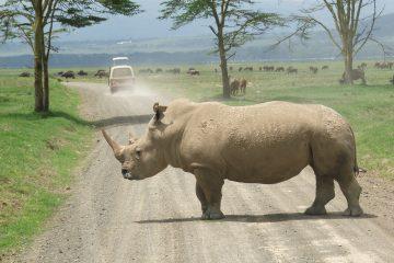 viajes beagle kenia safari akani 2