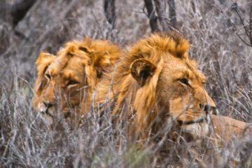viajes beagle sudafrica con botswana 1
