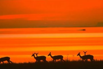 viajes beagle sudafrica con botswana 2