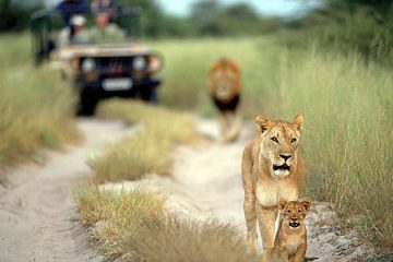 viajes beagle sudafrica lo mejor 1