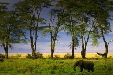 viajes beagle tanzania zanzibar 1
