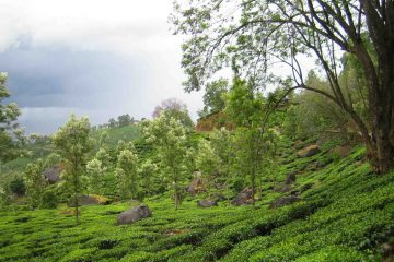 viajes beagle India lo mejor karnataka y Kerala