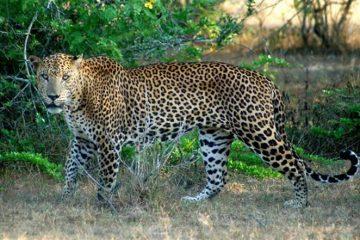viajes beagle lo mejor de botswana