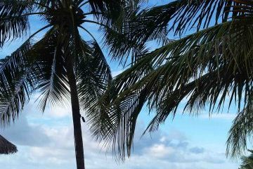 viajes beagle luna de miel por japon y polinesia