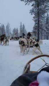 viajes beagle paseo trineo perros