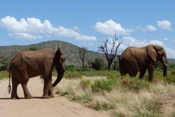 viajes beagle esencias de kenia