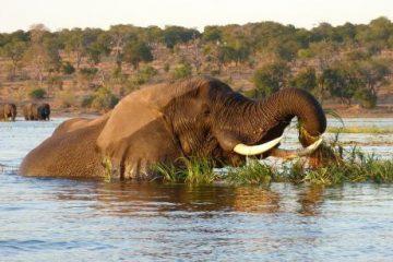 viajes beagle safari botswana