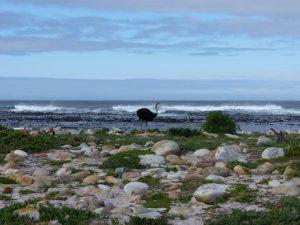 viajes beagle viaje novios africa