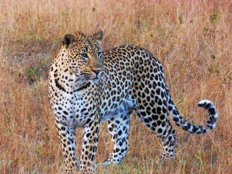 viajes beagle recomendaciones para viajar a sudafrica