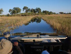 viajes beagle botswana safari