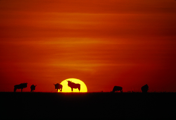 viajes beagle los 4 mejores safaris de africa