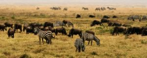 viajes beagle safari africa
