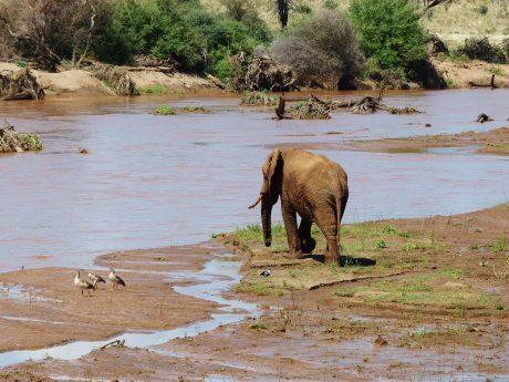 viajes beagle safari por kenia en privado