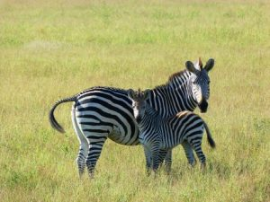 viajes beagle safari sudafrica