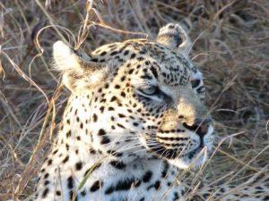 viajes beagle big five sudafrica