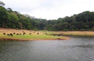 viajes beagle backwaters familia