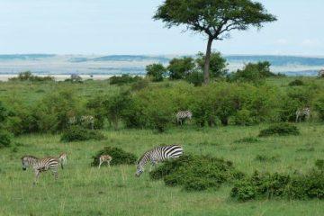 viajes beagle kenia y tanzania