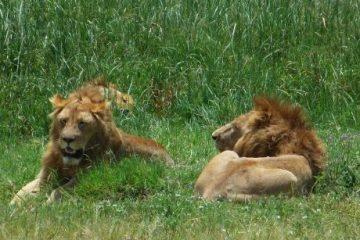 viajes beagle tanzania en privado