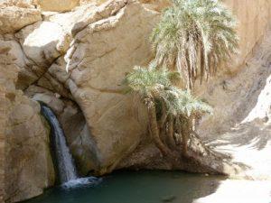 viajes beagle tozeur tunez