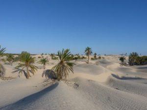 viajes beagle zaafrane tunez