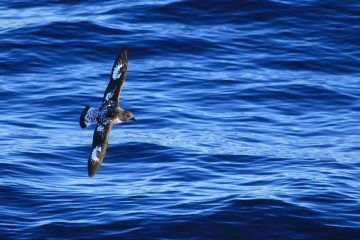 viajes beagle viaje a las malvinas