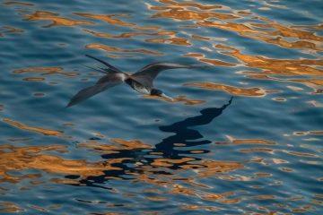 viajes beagle crucero galapagos