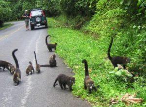 viajes beagle costa rica en coche alquiler