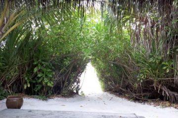 viajes beagle japon maldivas