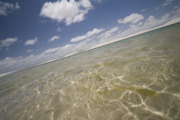 viajes beagle rio pantanal y recife