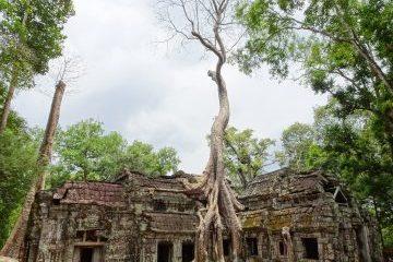 viajes beagle camboya en familia