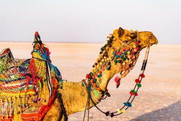 viajes beagle marruecos en familia fin de año