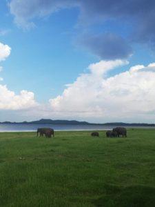 viajes beagle sri lanka elefantes