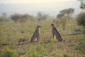 viajes beagle sudafrica novios maldivas