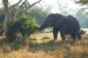viajes beagle namibia noviembre