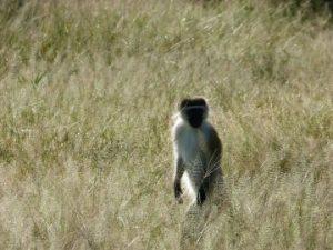 viajes beagle sudafrica noviembre