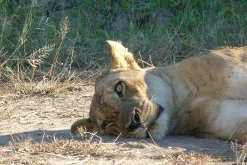 viajes beagle botswana safari aventura