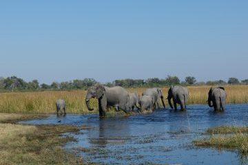 viajes beagle botswana semanasanta