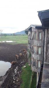 Viajes Beagle hotel Treetop en Kenia