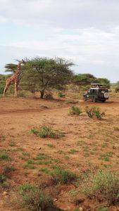 viajes beagle kenia jirafas