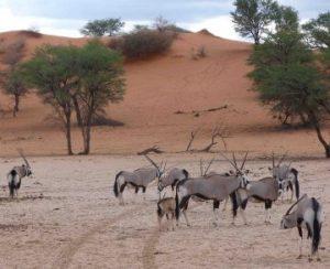 viajes beagle ruta coche alquiler namibia