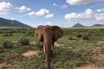 viajes beagle salida especial kenia y malindi