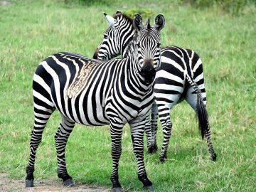 viajes_beagle-salida-especial-a-kenia