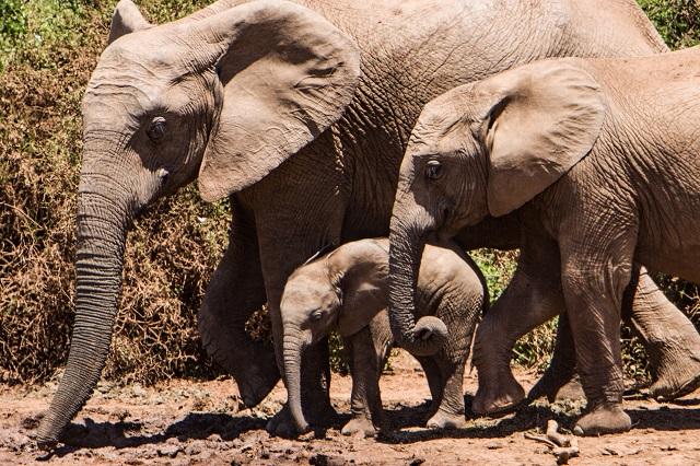 Parque Addo de Elefantes