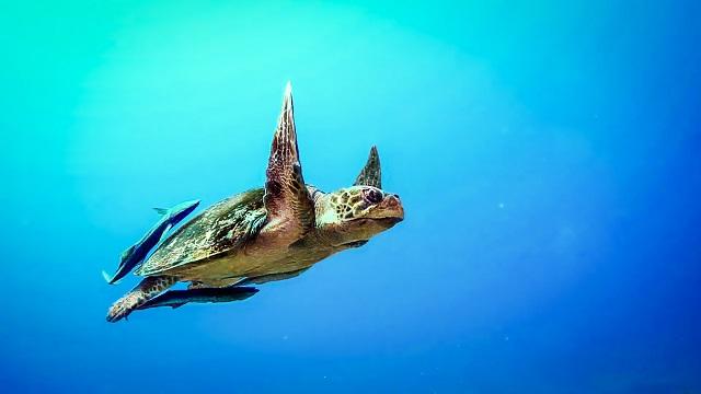 Tortuga nadando dentro del océano