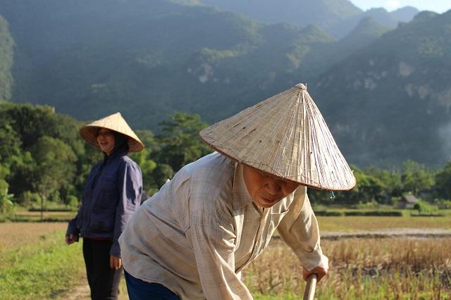 Agricultores de arroz en Vietnam